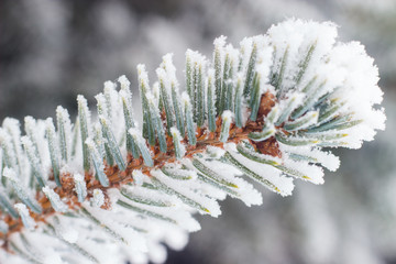 twig Christmas tree covered with hoarfrost