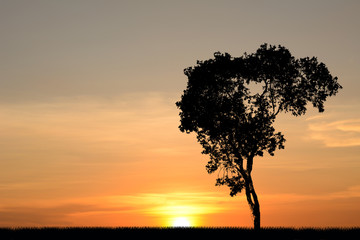 Tree silhouette Sunset background