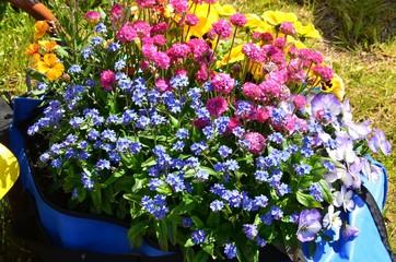 Bunte Blumendekoration in der Frühlingssonne