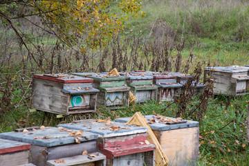 Arnie per la produzione del miele