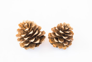 Close up gold pine cones on white background