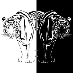 Tiger black and white, Vector