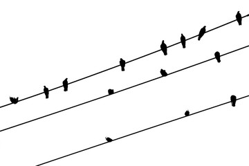 silhouette of pigeon on wire on white background