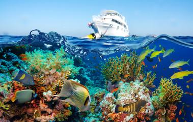 Kolorowa podwodna rafa z koralem i gąbkami