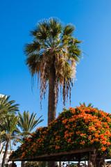 Palme unter blauem Himmel
