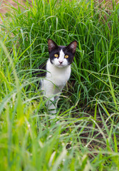 Black and white cat in the grass.