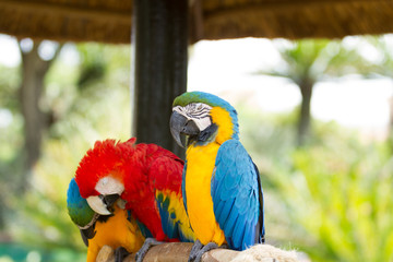 Poster Parrot Macaw