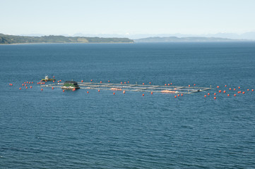 Fish Farm - Chiloe Island - Chile