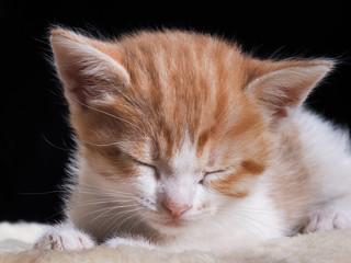Маленький котенок спит. Морда  котенка крупно. Котенок белый с рыжим. Котенку один месяц. Кот симпатичный, уютно дремлет на кусочке меха