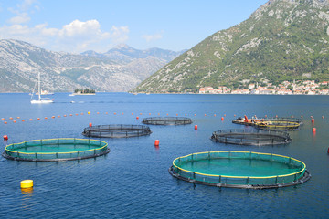 Fish farm in the bay of Kotor, Montenegro, the old town of Perast seen in the distance
