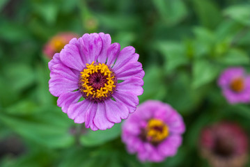 Purple flower on a background of leaves