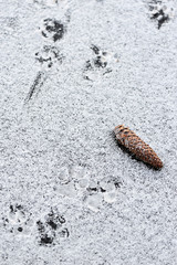 Cone on snow