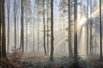 Fotobehang Bos Sun rays through the foggy forest