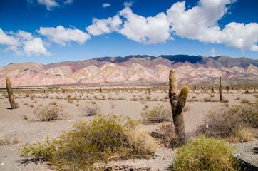 Cardon - Salta Province - Parque Nacional los cardondes - Argentine