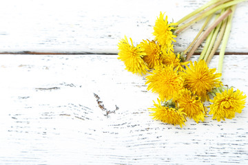 Yellow dandelion on white wooden background