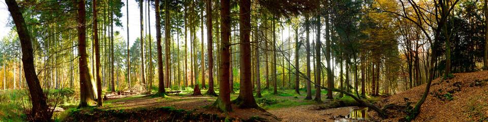 Fototapete - Wald Panorama bei Sonnenschein