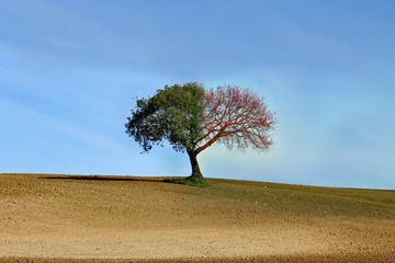 Quercia, campagna, stagioni
