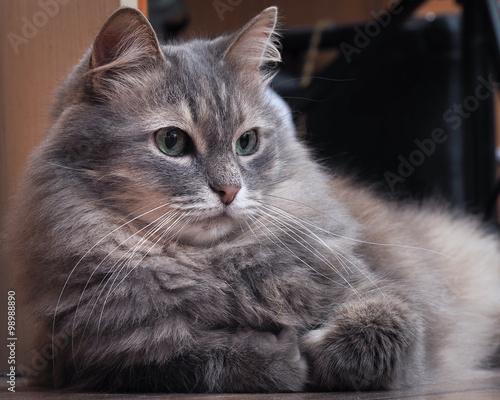 фото котов серых
