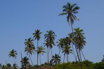 Кокосовые пальмы