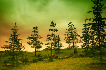 Landscape with pine trees and dramatic sky at sunset