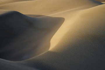Photo sur Plexiglas Secheresse Sandy dunes in desert / Sandy and wavy dunes with stylish forms in a wide desert under blue sky
