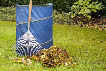 Rake standing next to blue bag with autumn leaves