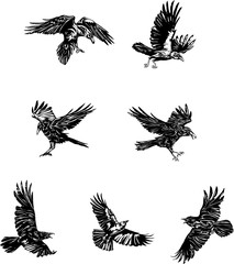 raven, crow, black, vector, drawing, decorative, ornamental, wild, sign, symbol, isolated, illustration