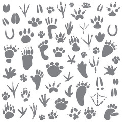 Traces of animals. Vector illustration. Isolated on white background