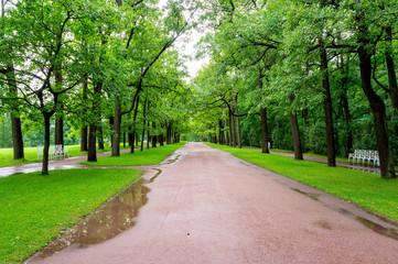 Park in Tsarskoye Selo after rain