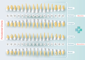 Dental and Periodontal Charting