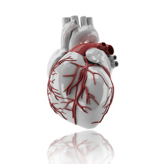 Human heart anatomy 3d render image in isolate background