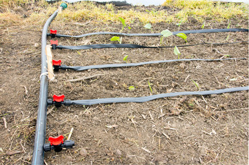 Irrigation system in greenhouse