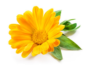 Calendula. Marigold flower with leaves isolated on white