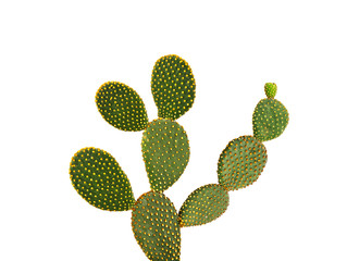 Papiers peints Cactus Opuntia cactus isolated on white background