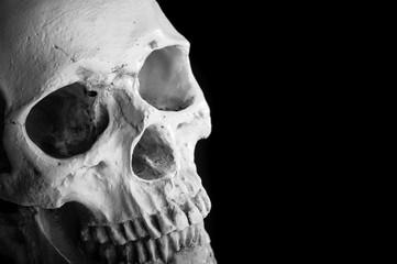 頭蓋骨,黒背景
