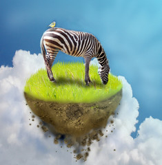 Zebra on piece of ground