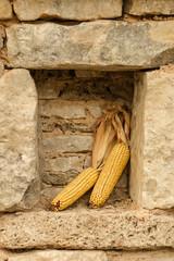 Pile of ripe corns