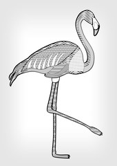 Flamingo in hatched design, isolated bird drawing with ornament on body on grey gradient background, tattoo template