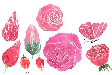 set of plant elements painted watercolor liar - rose, bud , flow