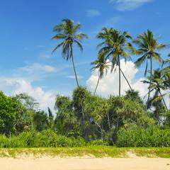 tropical palms on the sandy beach