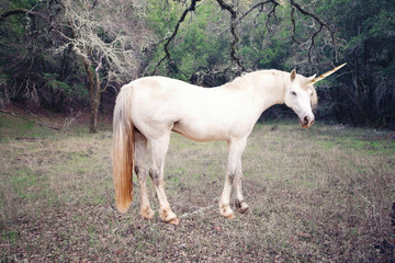 Unicorn photo realistic