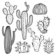 Cactus isolated on white background. Vector,  hand drawn set.