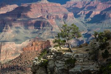 Grand Canyon, Nationalpark, South Rim, Schlucht, Naturwunder, Tafelberge, Arizona, USA, Colorado River, Sommer, Tag