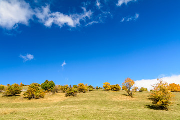 Beautiful orchard in a sunny autumn day. Horizontal view of a or