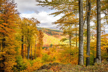 Autumn background in woods. Horizontal view of a clearing, top-s