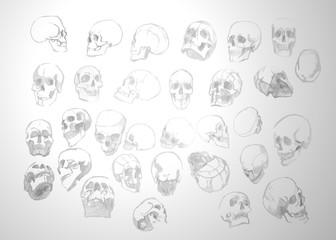 Texture anatomical human skulls on a grey background. Vector texture