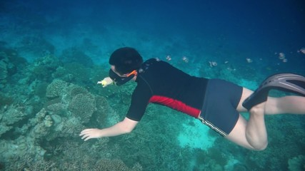 Wall Mural - Snorkeler diving along the brain coral