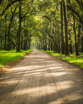 A lowcountry dirt road on Edisto Island near Charleston, SC, passes through an eerie looking tunnel of Live Oaks and Spanish Moss as sunlight and shadows filter through and criss cross the road.