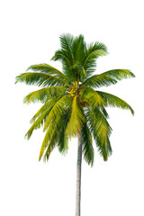 Coconut tree isolate with cliping parth