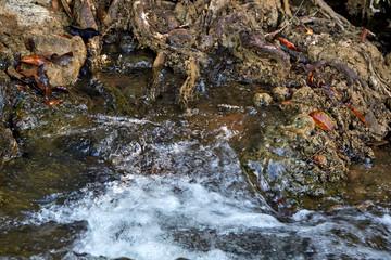 closeup rushing water cascade